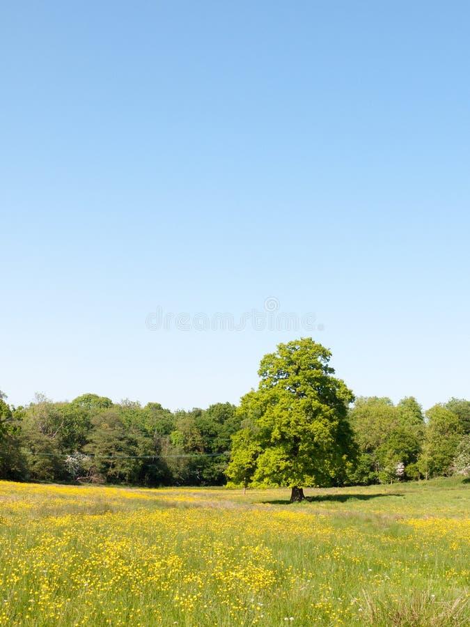 打开春天野外演习日豪华的天蓝色绿草背景yello 免版税库存图片