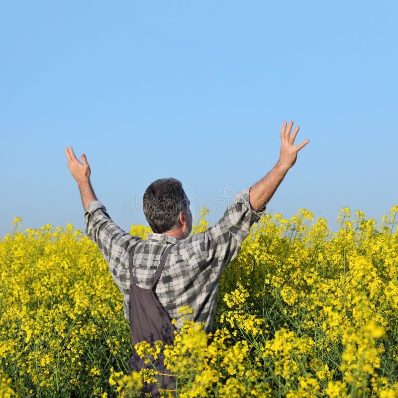 打手势在进展的油菜籽领域的农夫 库存图片