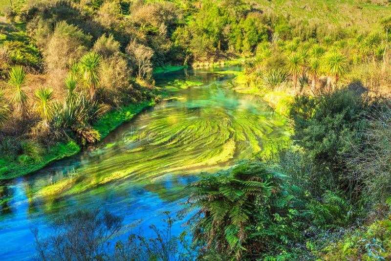 打旋与水厂的河 Te Waihou,新西兰 免版税库存图片
