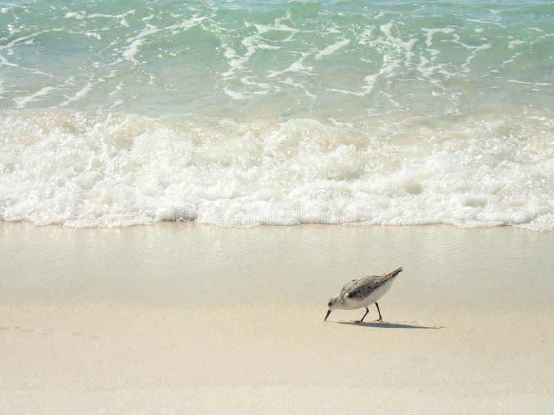 打破在与鸟的巴拿马城海滩的海绿色波浪 库存照片