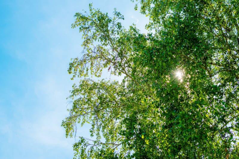 打破树的叶子的太阳的光芒 免版税库存图片