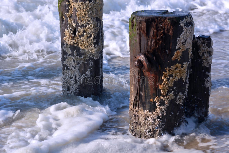 打破和飞溅沿木打桩的波浪 库存照片