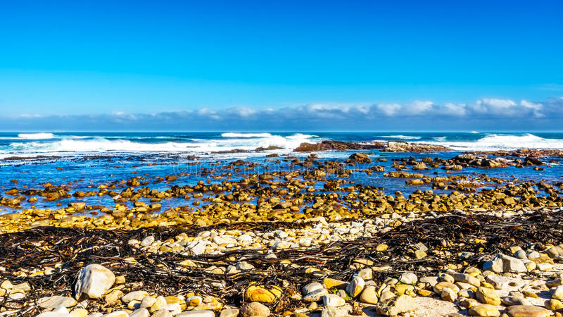 打破在好望角岩石岸的大西洋的波浪  库存图片