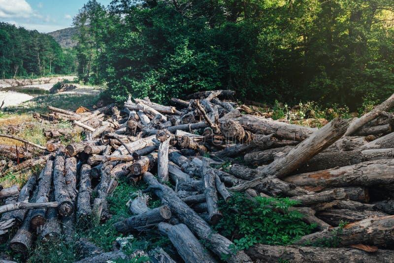 打破的下落的老树谎言在河背景的,生态砍伐森林概念夏天森林里 免版税库存照片