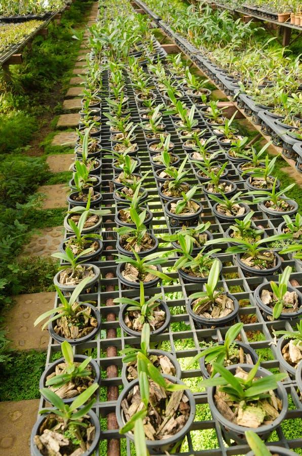 托儿所兰花在植物托儿所,泰国 免版税库存照片