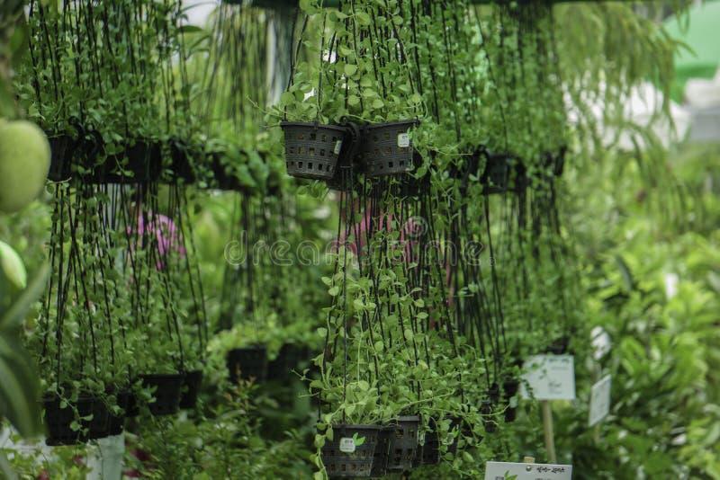 托儿所庭院的垂悬的托儿所盆栽植物 库存图片
