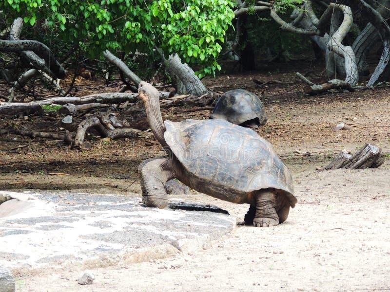 托尔蒂岛gigante 免版税库存照片
