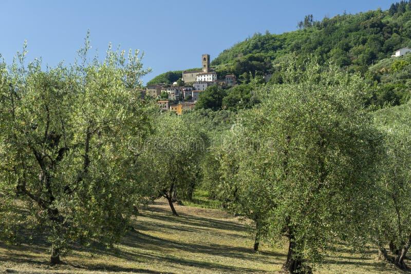 托斯卡纳佩西亚附近的乡村景观 库存图片