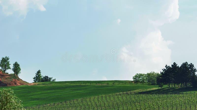 托斯卡纳小山 春天葡萄园 库存图片