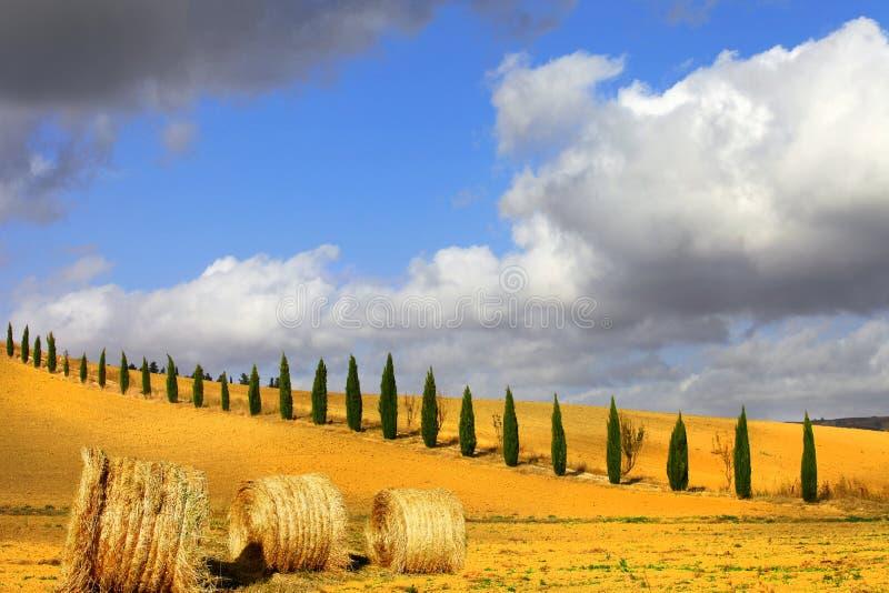 托斯卡纳的金黄小山 图库摄影