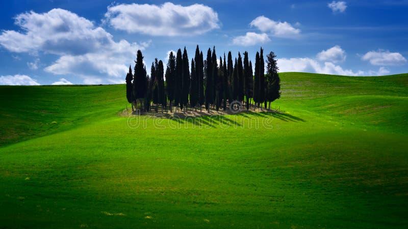 托斯卡纳著名柏树与蓝天和晴朗的春日 免版税库存图片