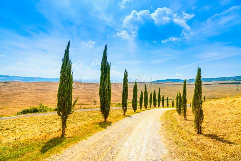 托斯卡纳,柏树白色路农村风景,意大利,欧洲 免版税库存照片