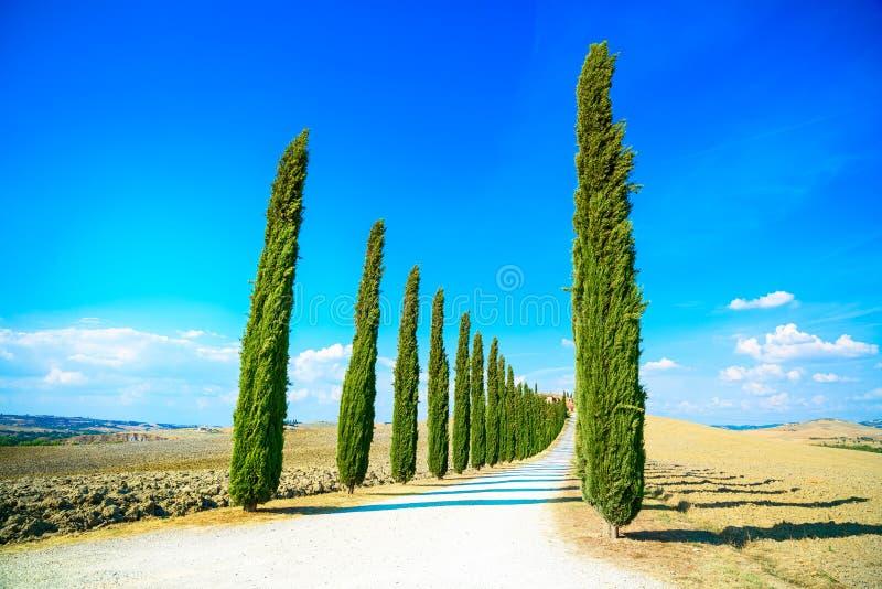 托斯卡纳,柏树白色路农村风景,意大利,欧洲 免版税图库摄影