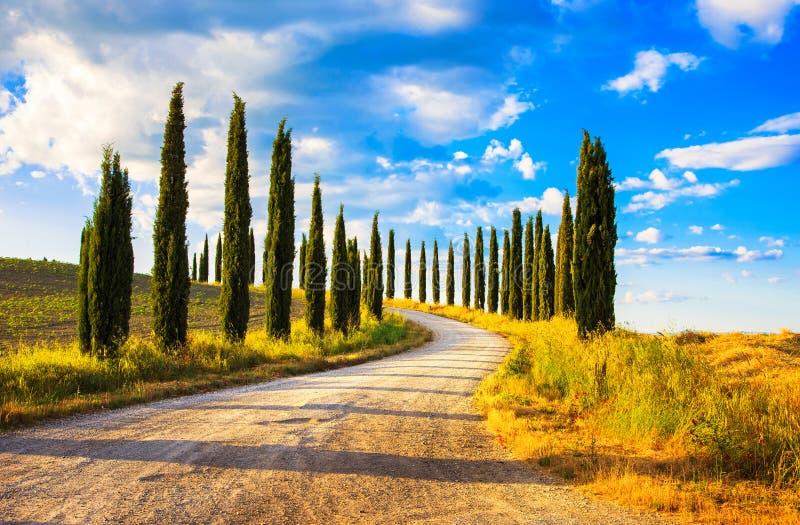 托斯卡纳,柏树白色路农村风景,意大利,欧洲 免版税库存图片