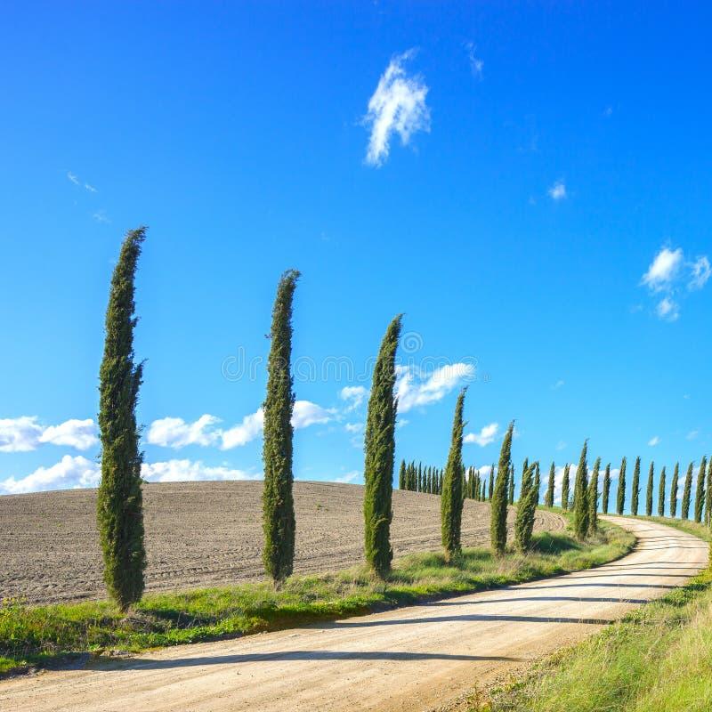 托斯卡纳,柏树空白路横向,意大利 库存图片