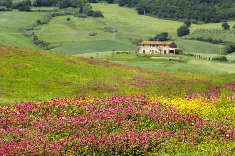 托斯卡纳-与春天花的风景 免版税库存照片