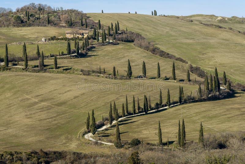 托斯坎乡下的典型的农村风景在锡耶纳,意大利南部的,当柏毗邻土路 库存照片