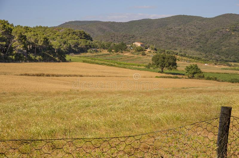 托斯坎Maremma乡下的Mage在意大利 免版税图库摄影