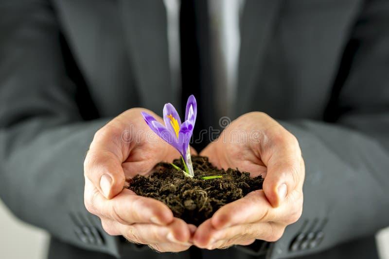 托起与一株紫色小苍兰的男性手土壤 库存照片