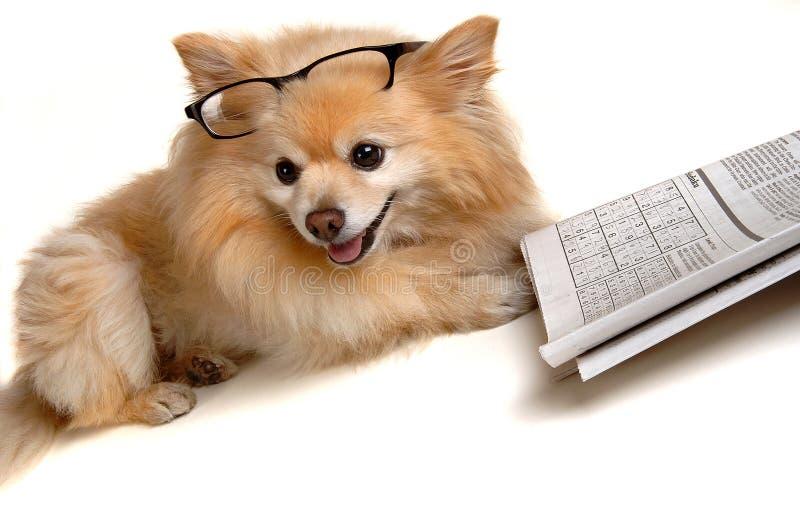 执行难题sudoku的狗 免版税库存照片