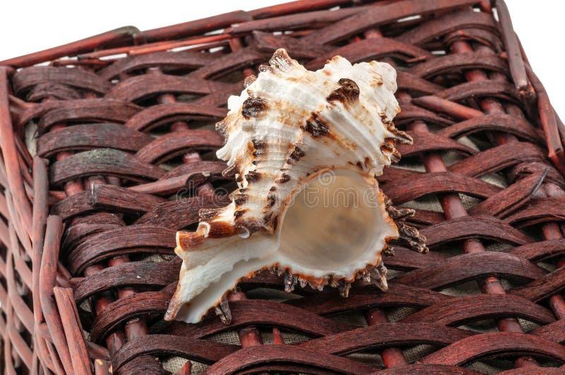 扭转的壳在白色隔绝的一个棕色柳条筐说谎 免版税图库摄影