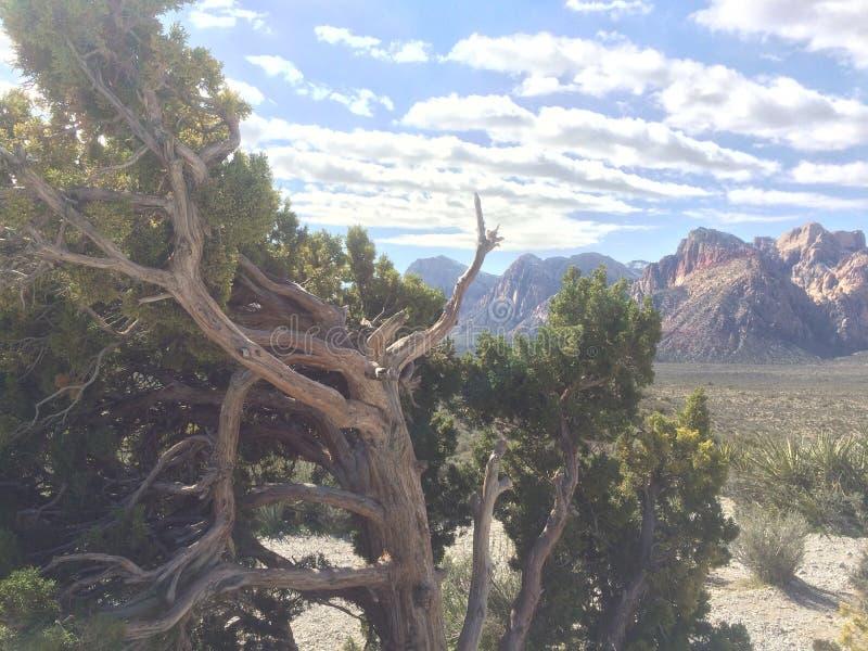 扭转的树在死亡谷,山在背景中 库存照片