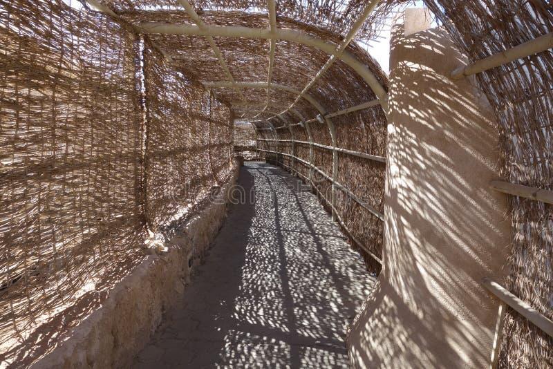扭转的藤茎隧道 免版税库存照片