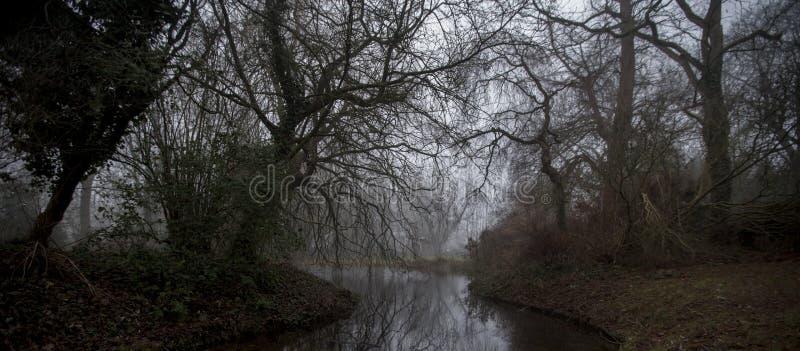 扭转,令人毛骨悚然的树在森林里 库存图片