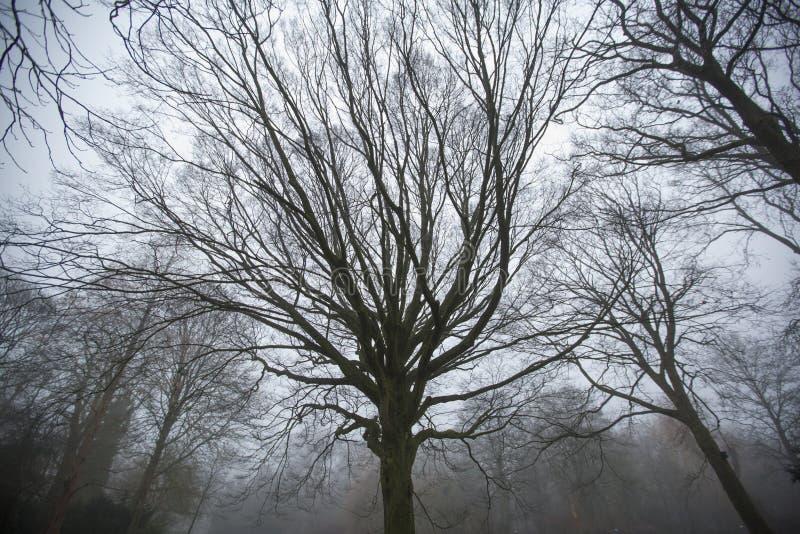 扭转,令人毛骨悚然的树在森林里 图库摄影