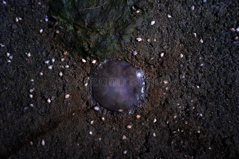 找到那些水母在Kuanniang,泰国的岸 库存照片