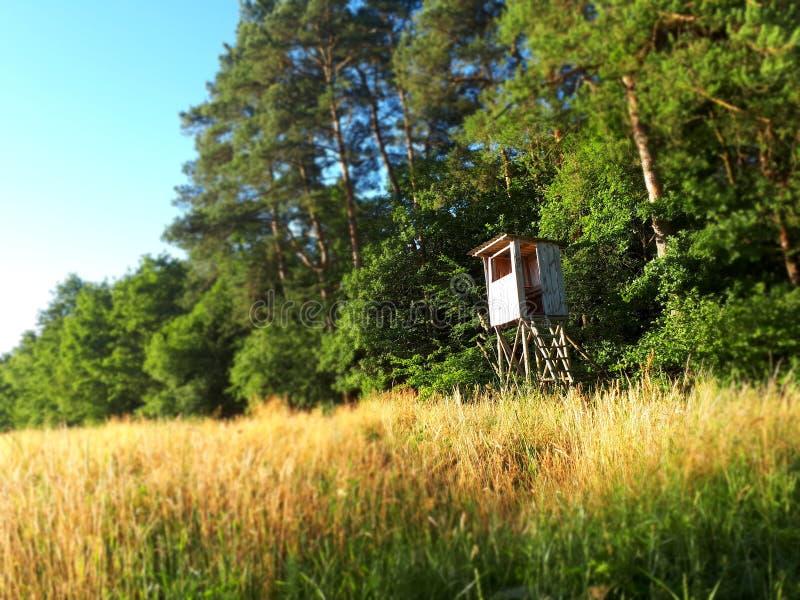 寻找区域的森林eith 免版税库存图片