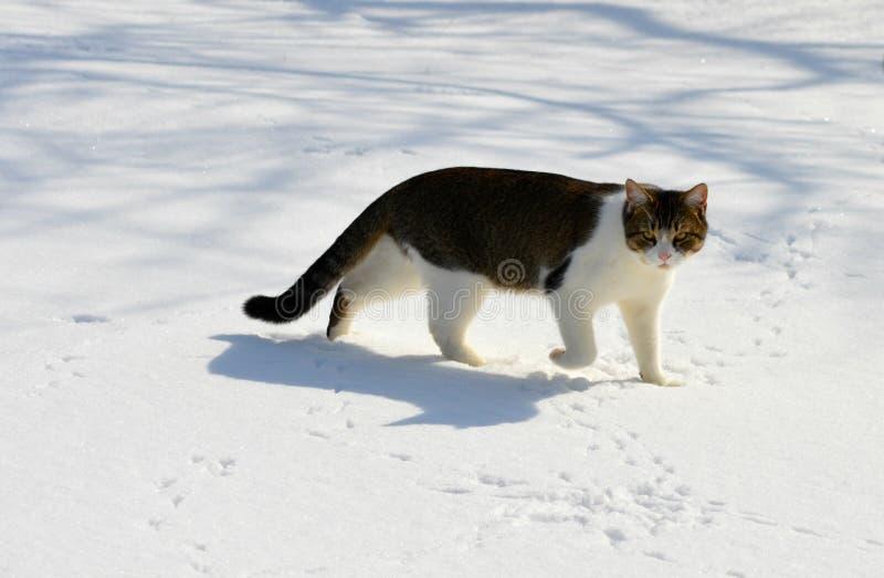 寻找在雪 免版税库存图片