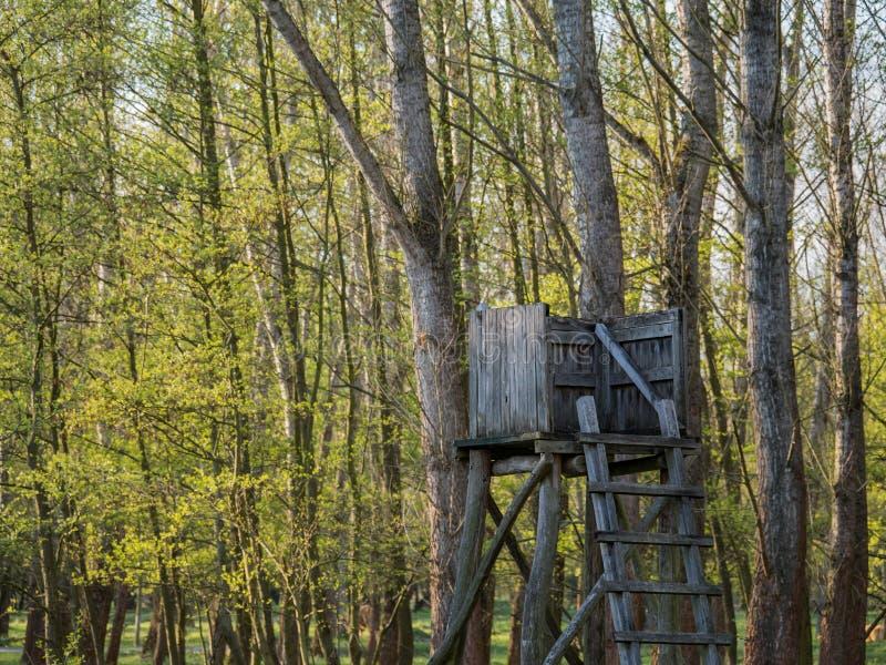 寻找立场在日落期间的森林里在勃兰登堡,德国 图库摄影