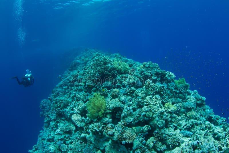 技术珊瑚潜水员的礁石 图库摄影