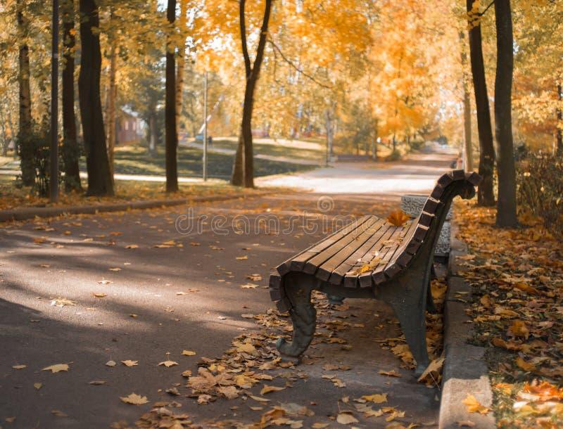 把公园秋天天阳光树橙色bokeh背景换下场 库存图片
