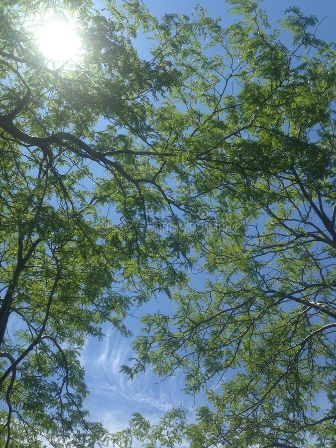 把树进行下去 免版税库存照片