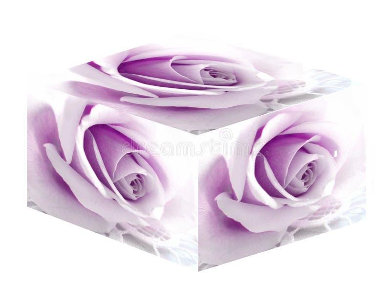把紫色装箱上升了 免版税库存照片
