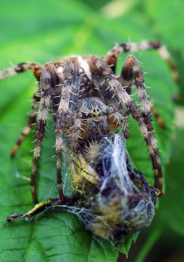 抓住蜘蛛 库存图片