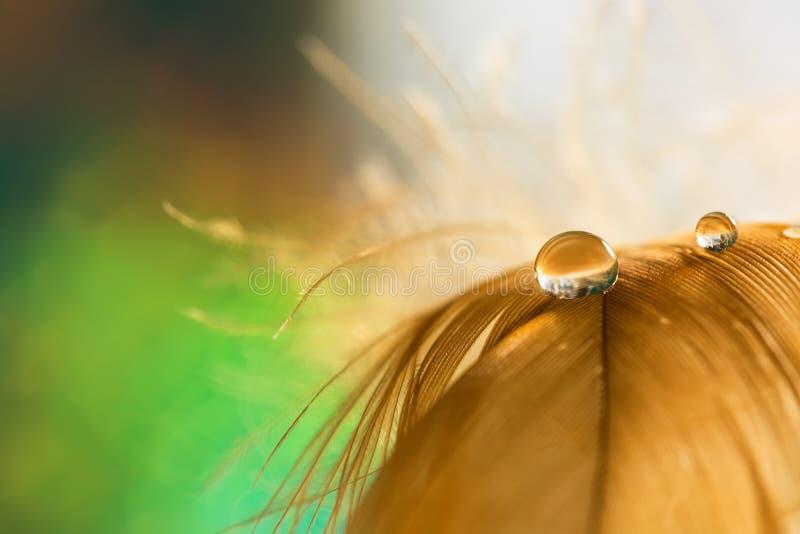 投下在蓬松羽毛特写镜头的水露水与在绿色背景的美好的bokeh 浪漫嫩艺术图象 图库摄影