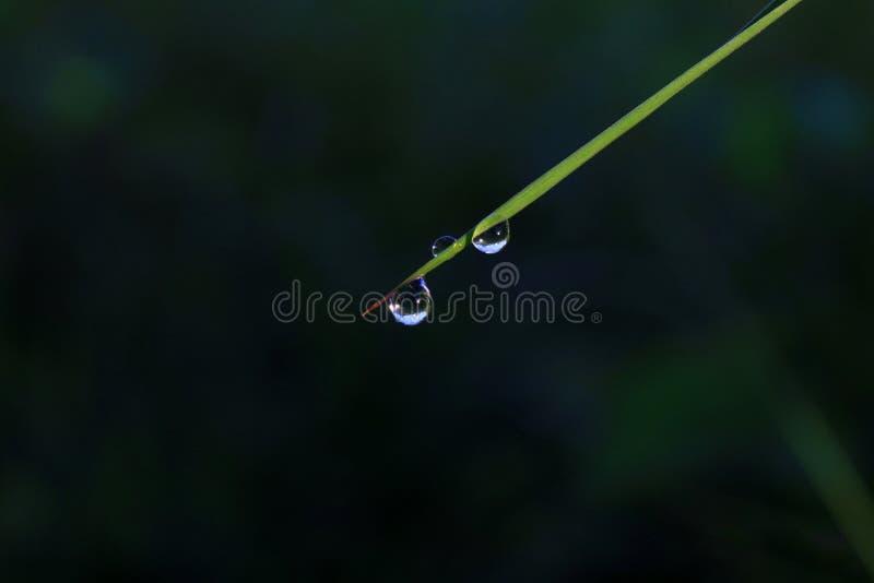 投下水雨湿叶子草自然绿色深黑色背景的露水草甸 免版税库存照片