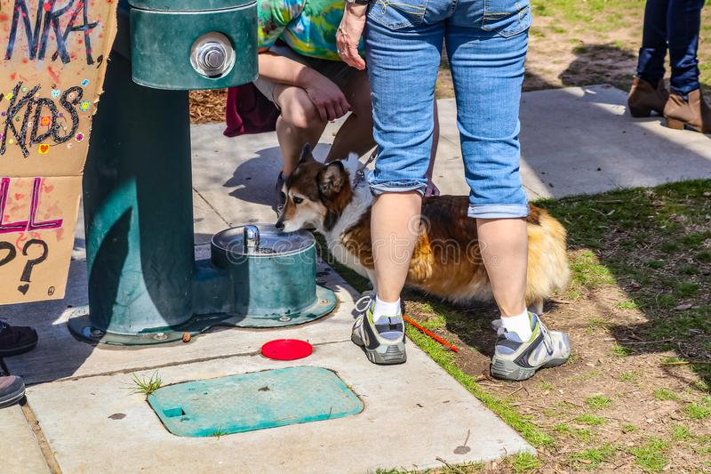 抗议者的脚和腿反对站立与小狗的枪的尾随喝从有一部分的一个小狗喷泉的抗议标志sho 免版税库存照片