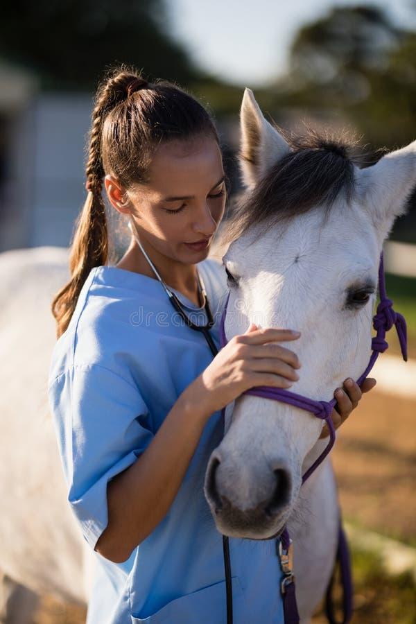 抚摸白马的女性狩医 免版税库存照片