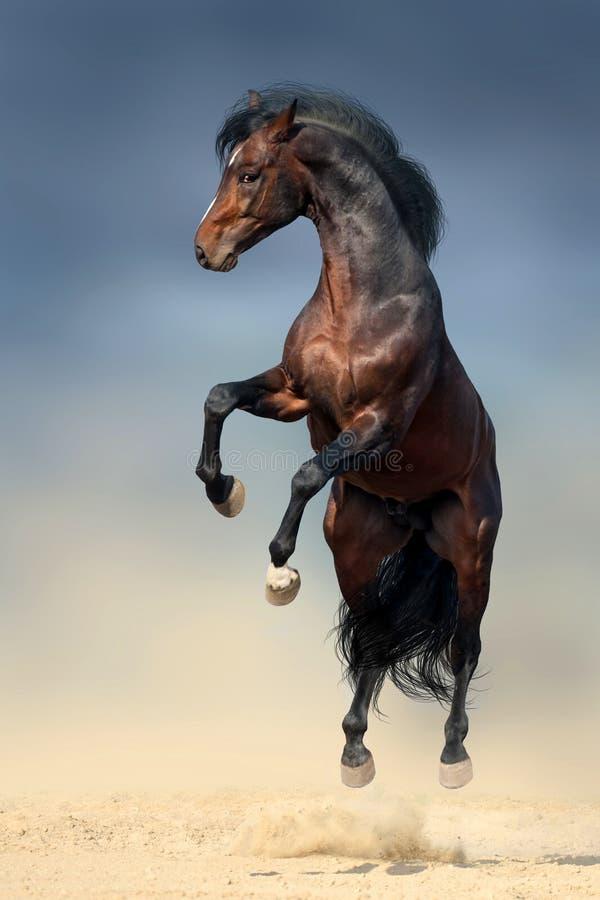 抚养的马 免版税库存图片