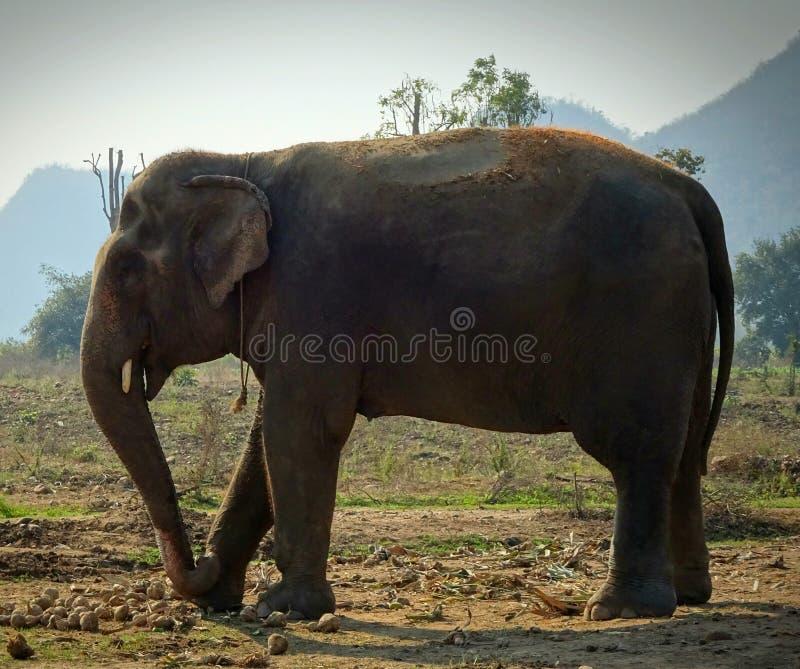 抢救大象 免版税库存照片