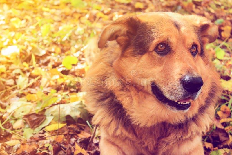 护羊狗在森林定了调子照片 免版税图库摄影