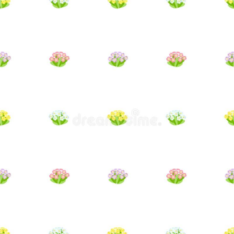 报春花无缝的样式 桃红色,蓝色,紫罗兰色春天花,在白色背景的绿色叶子 皇族释放例证