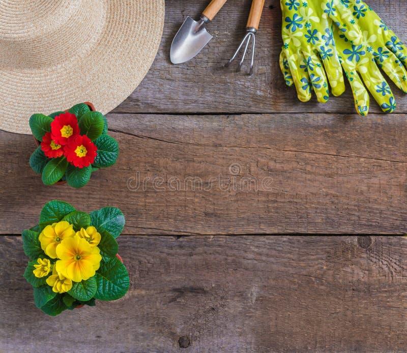 报春花樱草属寻常,黄色和红色庭院花,盆,工具,草帽,春天从事园艺的明信片概念 库存图片