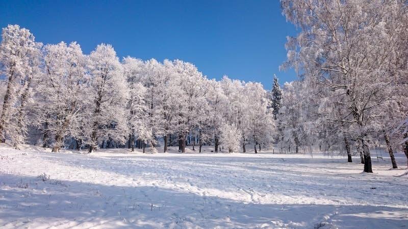 报道的山雪结构树冬天 库存图片