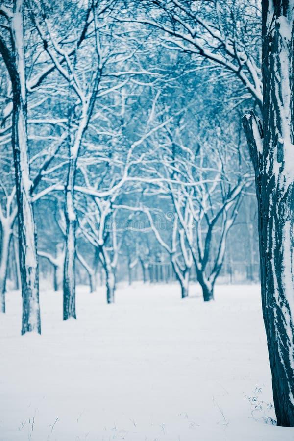报道的森林雪冬天 免版税图库摄影