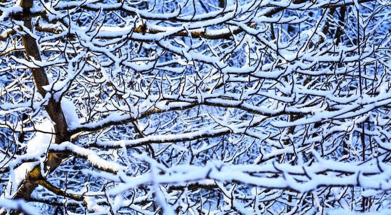 报道的森林雪结构树冬天 免版税库存图片